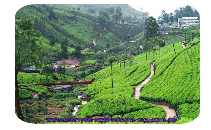 Шри Ланка: сезон для отдыха по месяцам. Отзывы, цена
